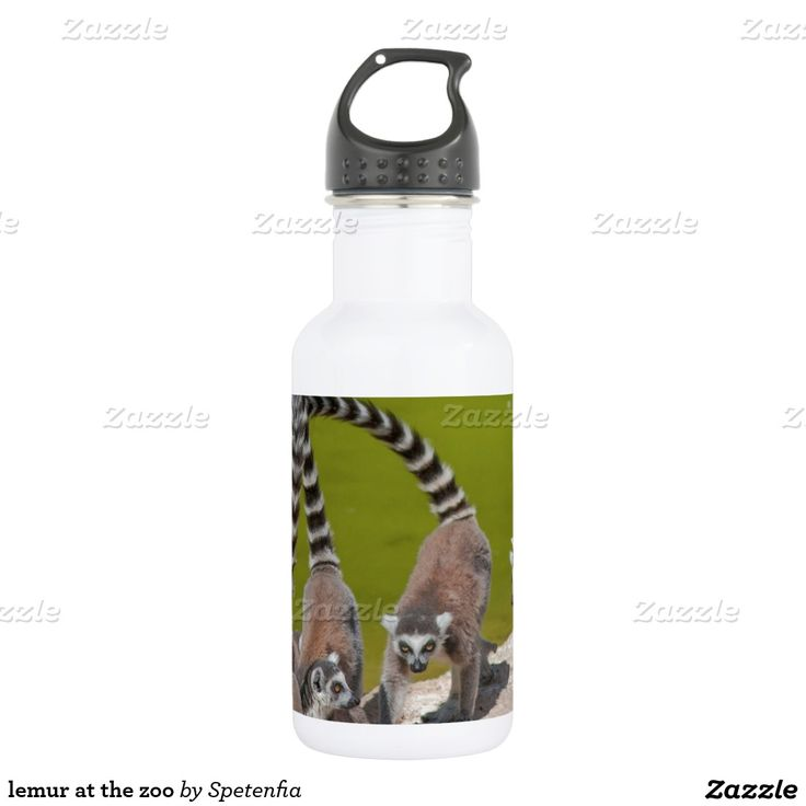 lemur at the zoo 532 ml water bottle