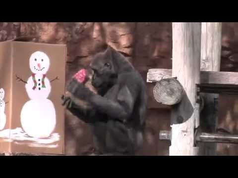 Zoo animals open Christmas gifts