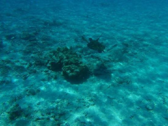 Similan Island turtles | Similan Island Bungalows - Mu Ko Similan National Park - Similan ...