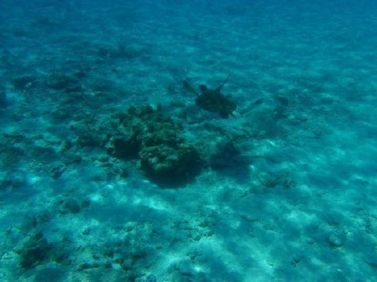 Similan Island turtles | Similan Island Bungalows - Mu Ko Similan National Park - Similan ...