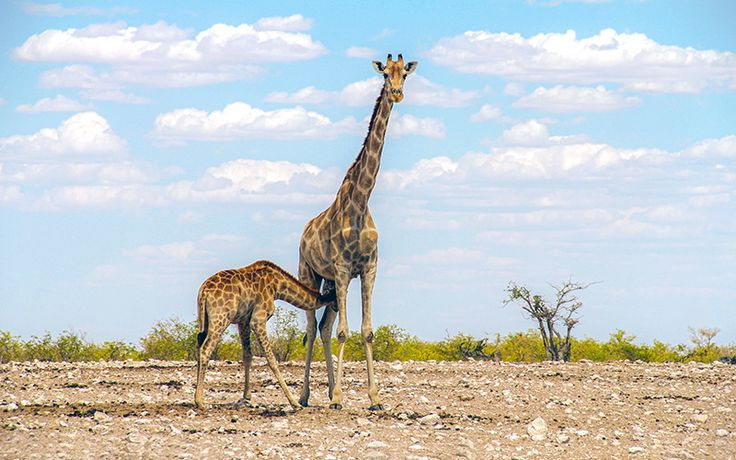 Namibia Travel Guide