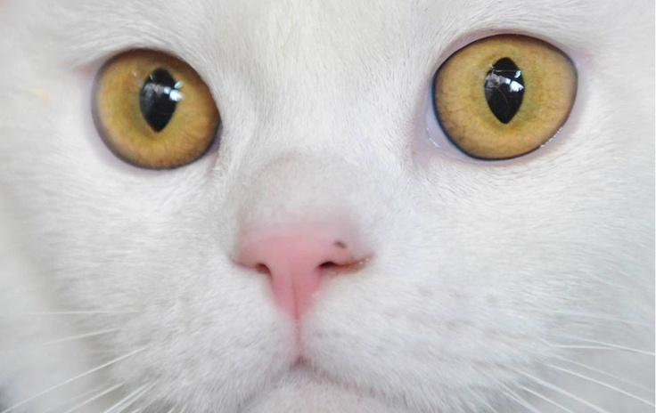 Não sou adepto a gatos, mas gostei da foto