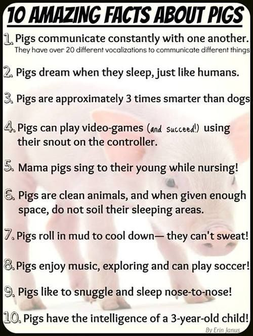 I get to experience dreaming piggies and singing mommas everyday! And people wonder why I work in a hog barn :)
