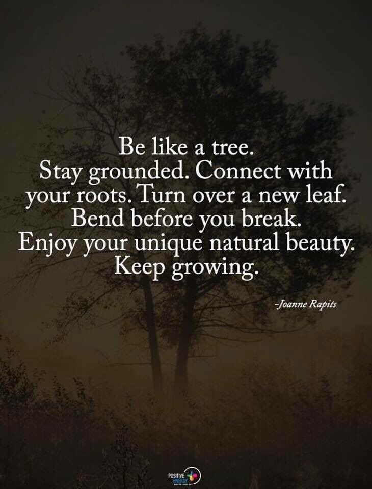 Be Like A Tree Stay Grounded Connect With Your Roots Turn Over New