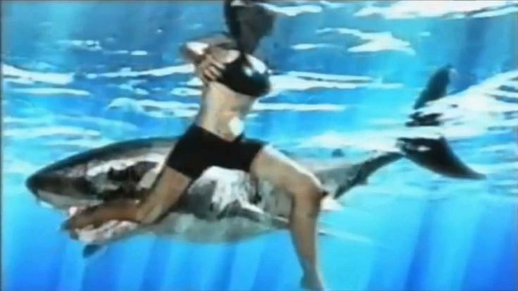 http://www.youtube.com/watch?v=X4DU_BmkGn0 - shark attacks  A Shark attack video. A real footage recorded when the shark attack was actually happening. This is spine chilling video of the great white shark fury.