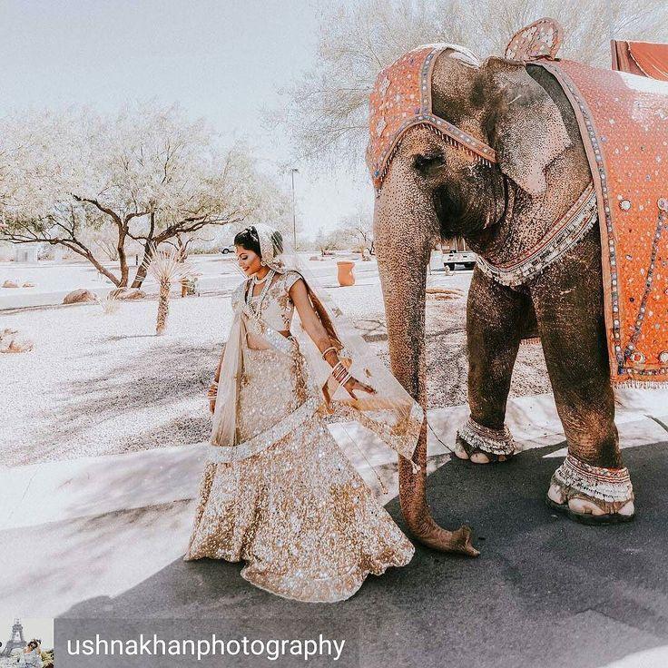 Photo by @ushnakhanphotography  #elephant  #desert #wedding #indianwedding #gold #lehenga #bride #beautiful #shaadibazaar #wedding #indianwedding