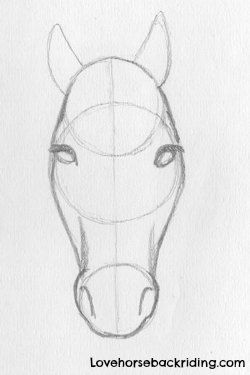 Designing Horse Pencil Drawings - Finishing the Horse Head