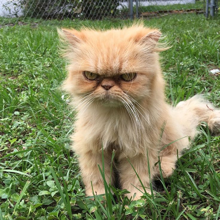 Homeless Grumpy Cat Found During House Inspection Gets Adopted, Hates Every Moment Of It