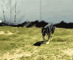 Expert Jumper