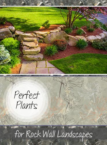 Amazing Rock Wall Plants and flowers.   Beautiful ground covers, plants, flowers and bushes that are perfect for rock wall landscapes.