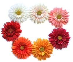 gerber daisy: my favorite flower