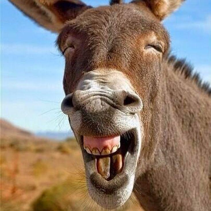 Смех в картинках про животных