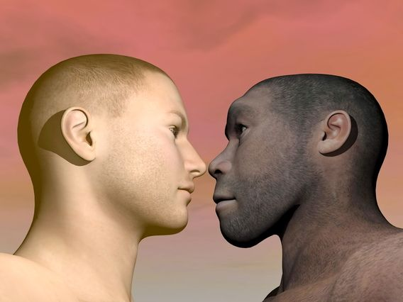 the closeness of modern humans to our ancient ancestors The modern scientific study of human evolution is  this ancient line suggests a close relationship with  humans and our ancestors are called homin.