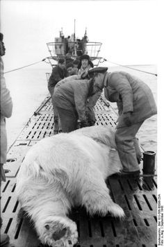 Nazi submarine with a dead Polar Bear on deck. The bear must have climbed aboard as it was surfacing.