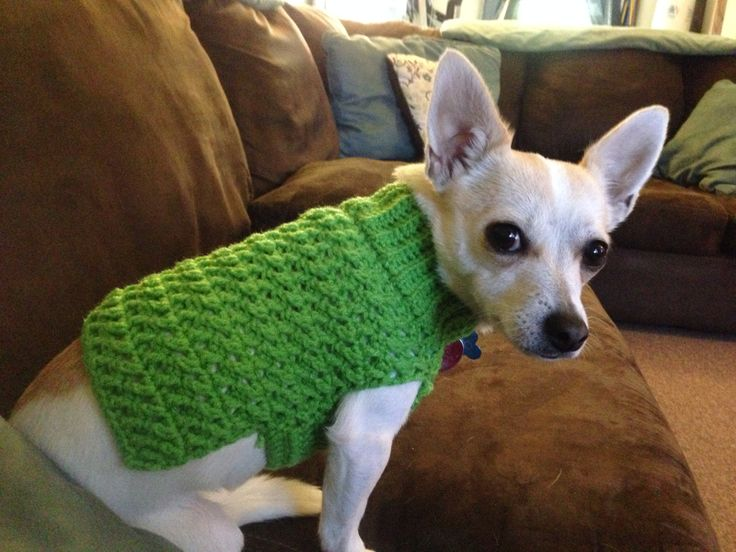 Small dog crochet sweater
