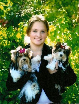 Biewer Puppies for Sale | Biewer Yorkshire Terriers | Biewer Yorkshire Terrier Breeder