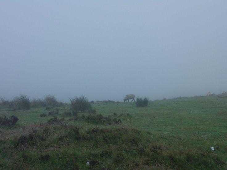 Cesta směrem k Dartmoor National Park. Zatím jen mlha (bez deště a vítru)