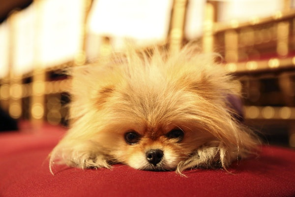 Lisa Vanderpump's Dog, Giggy