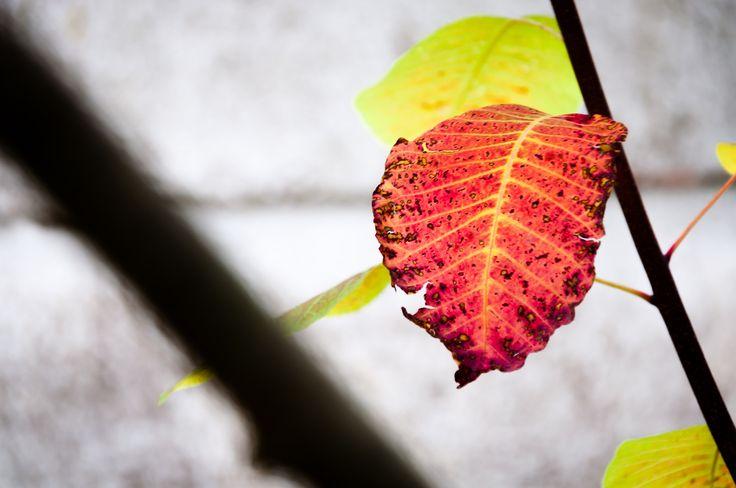 https://flic.kr/p/Dj9pA5 | Autumn | Autumns