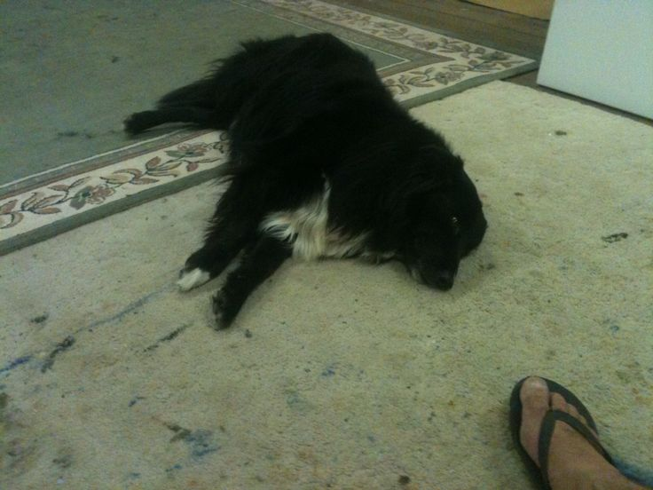 What the studio dog does best