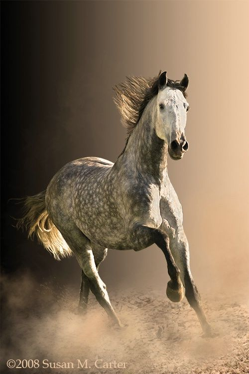 This looks like my Arabian!!  You dont see Dapple Grey very often!