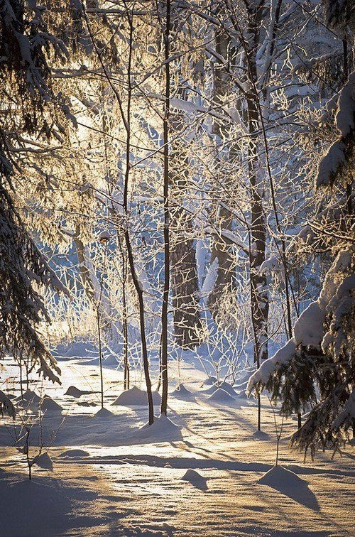 .Frozen forest