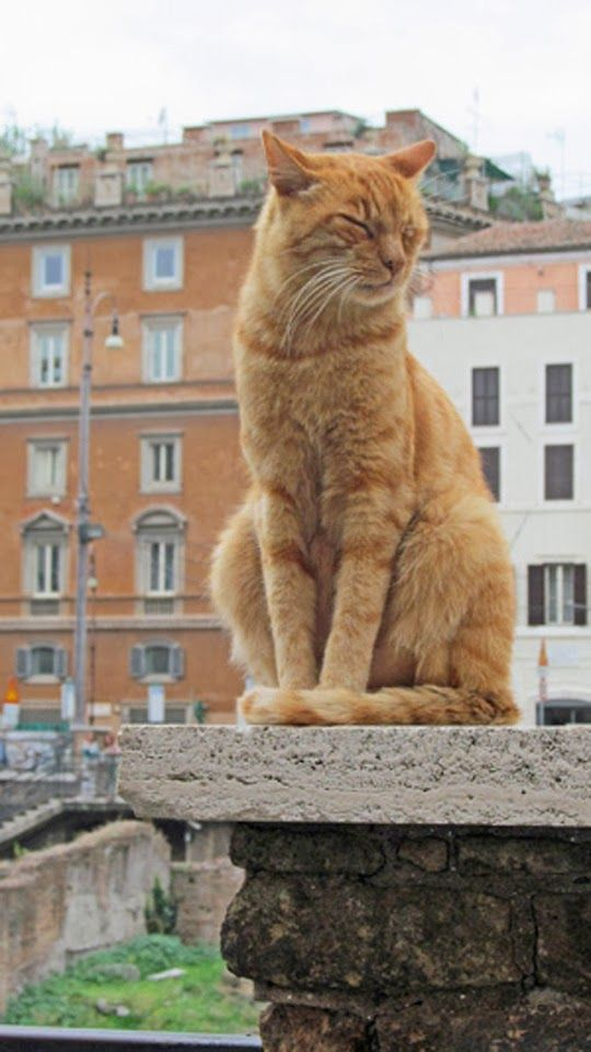Orange cat on a column in Rome, Italy. From the photo essay CATS OF ITALY/GATTI d'ITALIA by Janet Wellington: http://www.traveling-cats.com/2013/11/cat-from-rome-italy.html (cats of Rome, cats of Italy, cats, Rome, Italy, gatti d'italia, orange cats, Rome columns, photo essay)