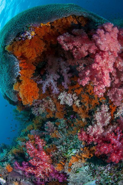 Crazy colors in the coral in every Nook And Cranny. This photo was taken on a diving trip to Raja Ampat, Indonesia. The colors in some of the locations were stunning, the soft coral literally filled every nook and cranny!    WWW.ClearBluePhoto.com – Check out the full album and see more stories