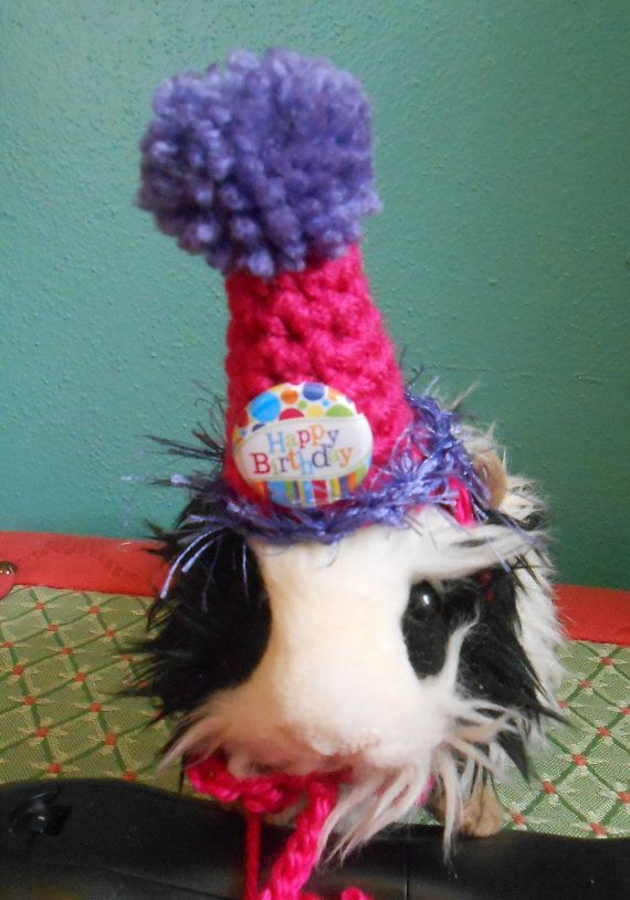 Guinea Pig Pink Birthday Hat  Guinea Pig Clothes by Fancihorse