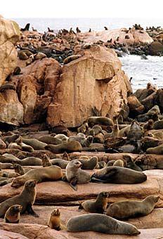 """Die """"Isla de Lobos"""" ist eine uruguayische Insel und mit etwa 200000 Seehunden, Seelöwen und See-Elefanten beheimatet. Somit beherbergt das felsige Eiland die größte Kolonie solcher Meeressäugetiere in ganz Südamerika."""