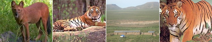 India has innumerous wildlife national parks and sanctuaries. India is a haven for the lovers of wildlife and nature.  There are many Indian states that entice the travellers to visit them and explore the many wonders of their deep jungles. Wildlife tours to Odisha offer adventurous yet truly enjoyable tours to make your holidays exciting and most memorable ones for lifetime.