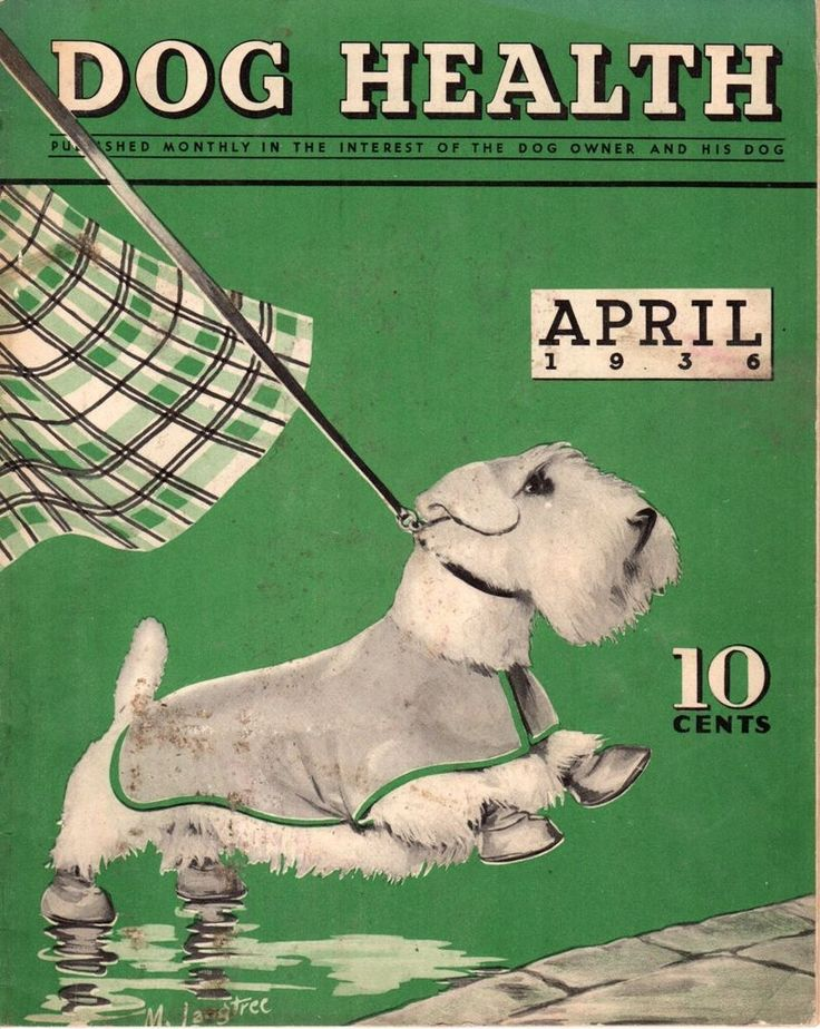 "April 1936 ~Front Cover Illustration of ""Dog Health"" Magazine .... Sealyham Terrier ...."