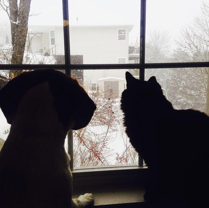 Watching snow fall