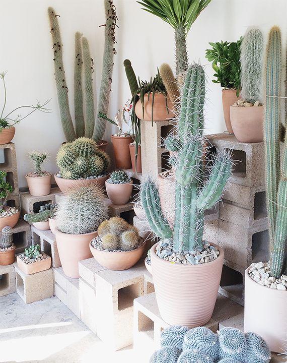 Variedad de cactus para un rincón de la casa