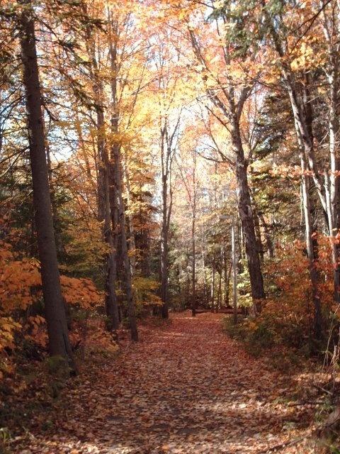 This is Centennial Park, #Moncton, New Brunswick, #AtlanticCanada