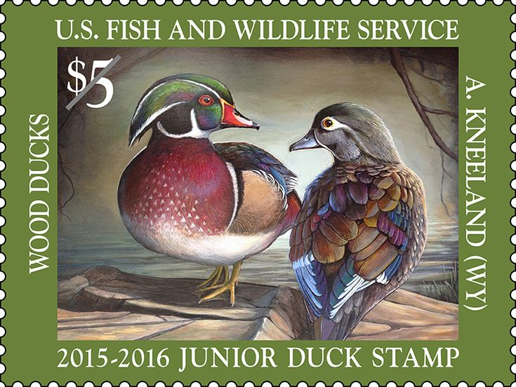 U.S. Fish & Wildlife Service - Migratory Bird Program | Conserving America's Birds