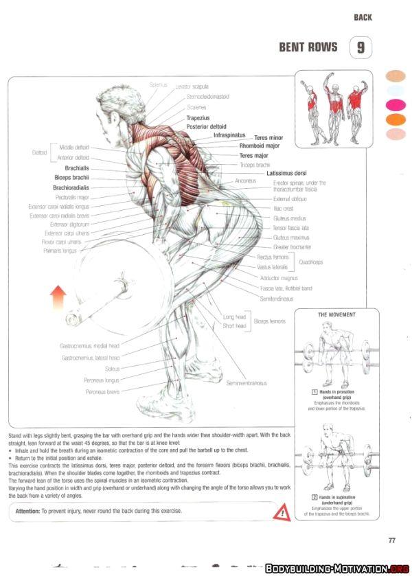 strength training anatomy workout pdf