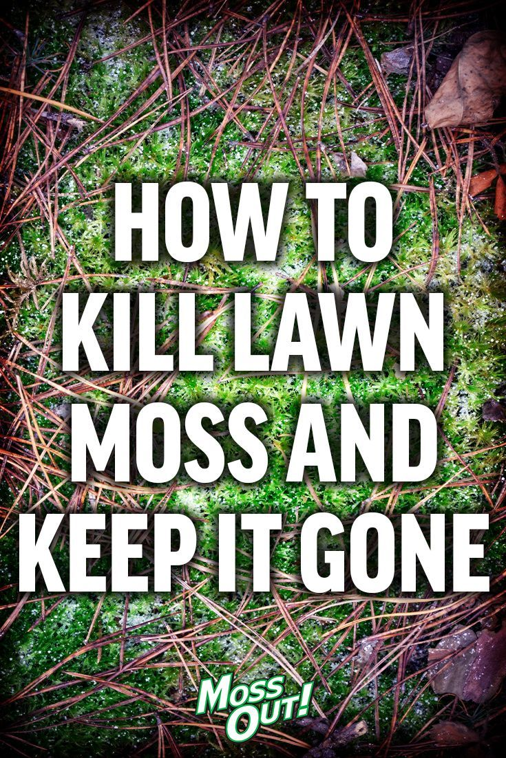 bad0f571e83eb13314274775dcb8968e - How To Get Rid Of Moss In Grass Naturally