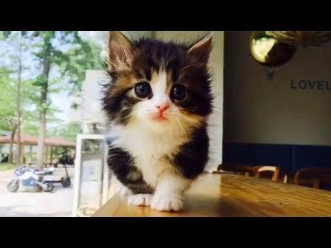 These Munchkin Kittens Will Make Your Day So Much Better