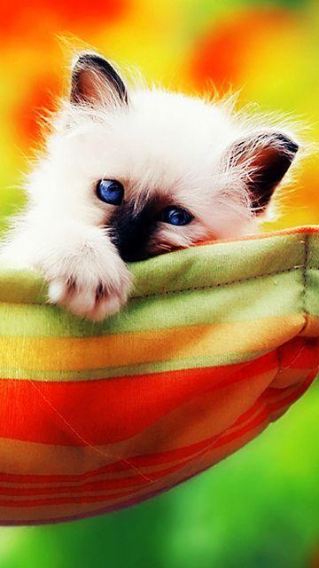 gatinho bonito - mobile9