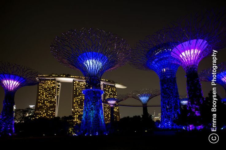 Photo by Emma Booysen Photography. Supertree Grove at the Gardens by the Bay Singapore.