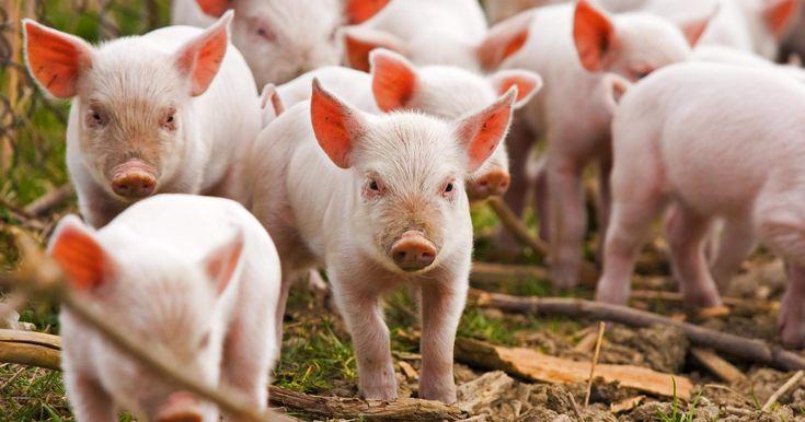Philosophy Archives | Animal Charity Evaluators