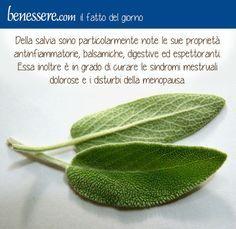 #salvia #menopausa #benessere