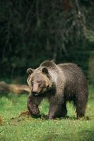 Fun Facts About Hibernation and Bears for Preschoolers - Follow the leader game information