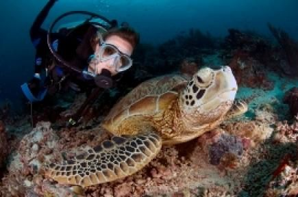 Diving Semporna - Guide to diving Semporna with marine life & Dive Centre information