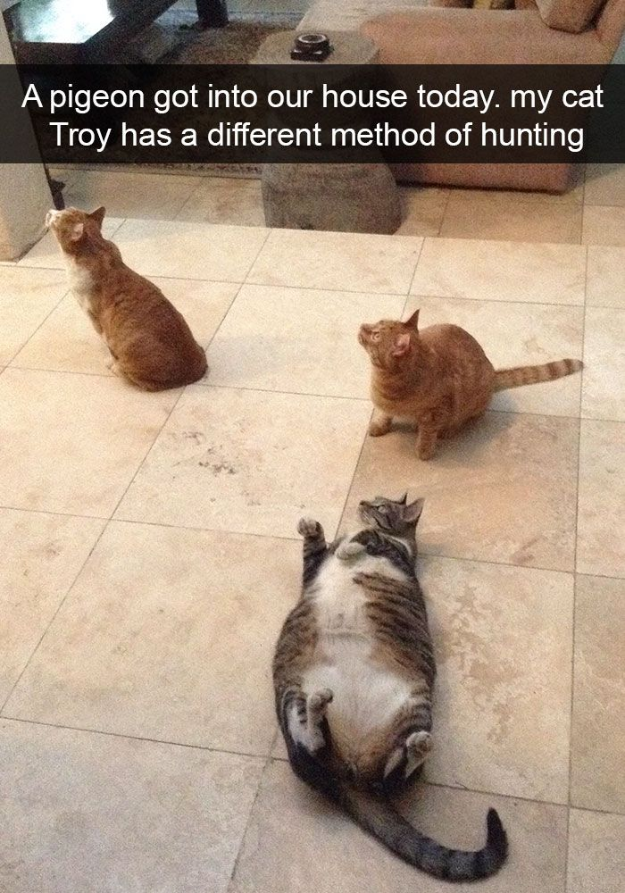 128 Hilarious Cat Snapchats That Are Impawsible Not To