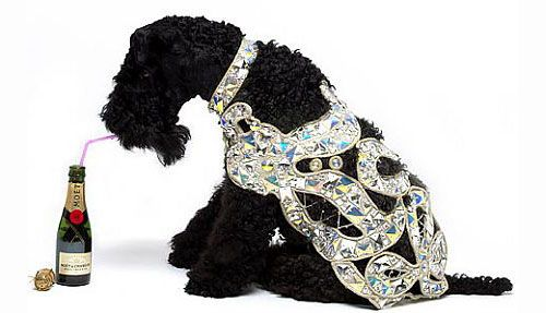 Vivienne Westwood dog coat  Oh, for god's sake...please.....!!!!! Unbelievable!!!