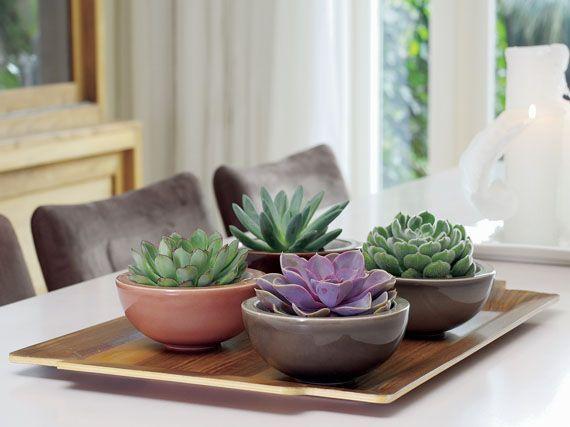 Las 25 mejores ideas sobre plantas moradas en pinterest y for Cactus cuidados interior