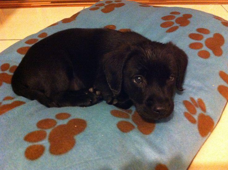 Our springador, Archie. He's amazing :)