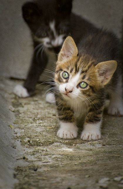 cute stray kitten | Flickr: Intercambio de fotos